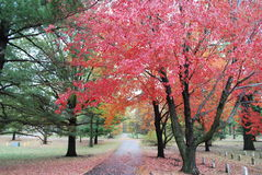 Листья осени в кладбище ветеранов стоковая фотография rf