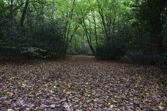 Листья осени в лесе северном Лондоне Стоковые Изображения