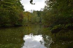 Листья осени в лесе северном Лондоне Стоковые Фото
