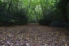 Листья осени в лесе северном Лондоне Стоковые Изображения RF