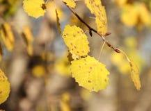 Листья осени в ноябре стоковые фото