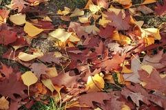 Листья осени в парке осени Стоковые Фотографии RF