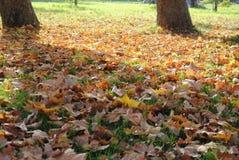 Листья осени в парке стоковое фото rf