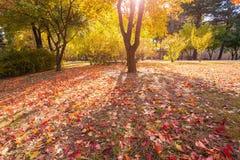 Листья осени в парке Стоковая Фотография RF