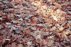 Листья осени в пуще Стоковые Изображения