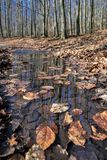 Листья осени в пуще Стоковые Фотографии RF