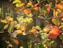 Листья осени в ретро стиле Винтажная карточка на старой бумаге Стоковое Изображение