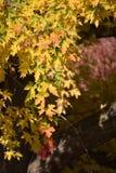 Листья осени в рощах Лесли паркуют, Richland, WA стоковое фото