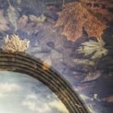Листья осени в сердце Kyiv, Украины Стоковые Фотографии RF
