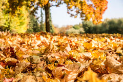 Листья осени в парке Стоковое Фото