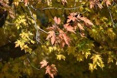 Листья осени в спокойствии местного предложения парка сезонном стоковые изображения