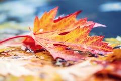 Листья осени в цветах и светах осени Ненастная погода осени Упаденные листья осени в воде и ненастной погоде Цветы осени стоковое фото