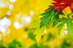 Листья осени в цветах и светах осени Ненастная погода осени Упаденные листья осени в воде и ненастной погоде Цветы осени стоковая фотография