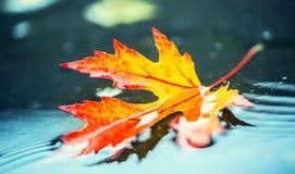 Листья осени в цветах и светах осени Ненастная погода осени Упаденные листья осени в воде и ненастной погоде Цветы осени стоковые фото