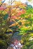 Листья осени в Shoyo-en японском саде Nikko, Япония Стоковое фото RF