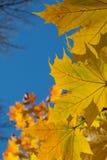 Листья осени граничат голубое небо Стоковая Фотография RF