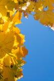 Листья осени граничат голубое небо Стоковые Изображения