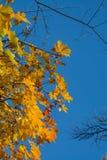 Листья осени граничат голубое небо Стоковая Фотография