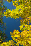 Листья осени граничат голубое небо Стоковое фото RF
