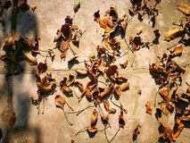 Листья осени грецкого ореха Стоковое Фото