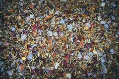 Листья осени лежа на том основании стоковые фото