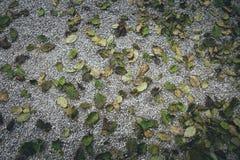 Листья осени лежа на том основании стоковое изображение rf