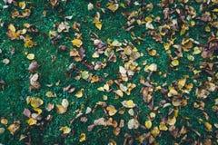 Листья осени лежа на траве Стоковые Изображения