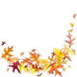 Листья осени летания Стоковое Изображение RF