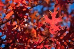 Листья осени детали картины через солнечный свет Стоковое Фото