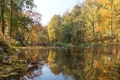Листья осени желтого цвета, апельсина и красного цвета в красивом падении паркуют Iecava latvia стоковые изображения rf