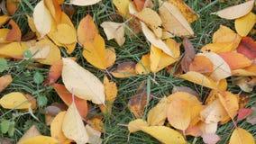Листья осени желтые упаденные на зеленой траве в парке сток-видео