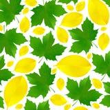 Листья осени желтого цвета и зеленого цвета Падая листья на белой предпосылке Стоковая Фотография