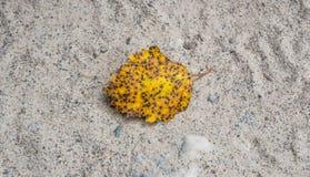 Листья осени желтые Стоковая Фотография RF