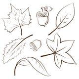листья осени жолудей бесплатная иллюстрация