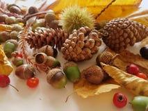 Листья осени закрывают вверх с светом природы стоковые фотографии rf