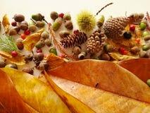 Листья осени закрывают вверх с светом природы стоковые фото
