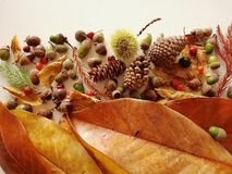 Листья осени закрывают вверх с светом природы стоковые изображения