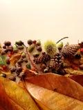 Листья осени закрывают вверх с светом природы стоковые изображения rf