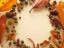 Листья осени закрывают вверх с светом природы стоковое фото rf