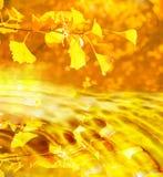 листья осени золотистые Стоковые Изображения