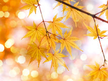 листья осени золотистые Стоковые Изображения RF