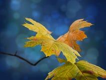 Листья осени изображения красивые Стоковое Изображение RF