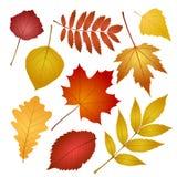 Листья осени изолированные на белой предпосылке Стоковое Фото