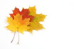Листья осени изолированные на белой предпосылке Стоковая Фотография