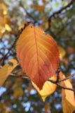 Листья осени листопада Стоковые Изображения