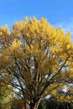 Листья осени листопада Стоковые Изображения RF