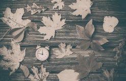 Листья осени и будильник Стоковое Фото