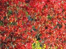 Листья осени и ветви, сезоны: осень Стоковая Фотография