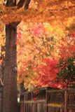 Листья осени и загородки, концепция осени стоковые изображения