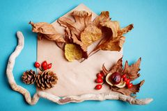 Листья осени и конусы сосны на голубой предпосылке крупный план предпосылки осени красит красный цвет листьев плюща померанцовый Стоковое Изображение RF
